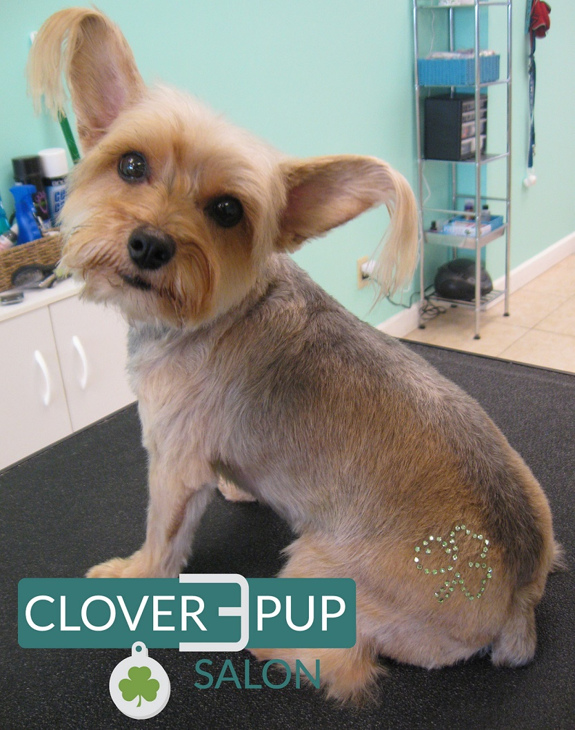 pup clover Thats One Sparkling Pup!
